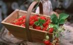 Сезонът на ягодите