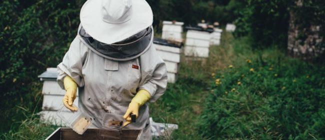Голямото вадене на мед с Медената къща (15.07.2017)