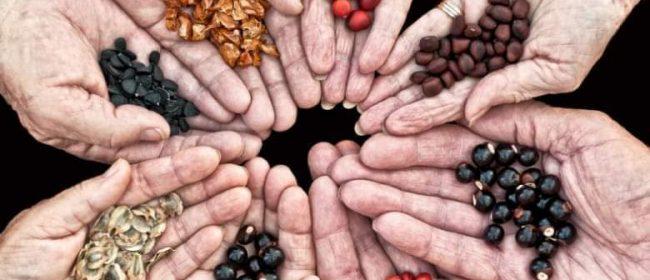 Размяна на семена / Seeds Exchange 3.03.2021